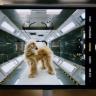 Apple, iPhone 11 Pro Ailesindeki Kameraları Tanıtan Bir Reklam Yayınladı