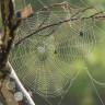 Plastiğe Karşı Geliştirilen Müthiş Alternatif: Ağaç Lifi ve Örümcek Ağı Birleşimi