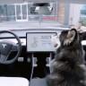 Tesla Araçlardaki Özellik, Bir Sürücünün Ceza Almasını Önledi