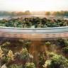 Apple'da Çalışmak İsteyenler İçin Apple'ın En Çok Çalışan Aldığı 10 Pozisyon