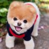 Sevimlilikleriyle Mutluluk Yayan Sosyal Medya Fenomeni 10 Evcil Hayvan