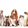Uygun Fiyatlı Köpek ve Kedi Maması Almak İçin 10 Uygulama