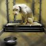 Alman Laboratuvarında Hayvanlara Karşı Yapılan İnsanlık Dışı Muamele (Video)