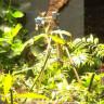 Dünyada İlk Defa Bir Bitki Tarafından Selfie Çekildi