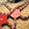 Okyanusun Dibinde, Deniz Yıldızı Benzeri Canlıların Gizemli Dünyası Keşfedildi