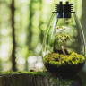 Atmosferdeki Karbondioksit Artışı Neden Bitkilerin Hızlı Büyümesini Sağlamaz?