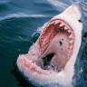 Sörfçüleri Ölümcül Köpek Balığı Saldırılarından Koruyan Bir Kıyafet Geliştirildi