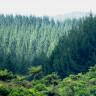 Karbondioksit ve Sıcaklık Dengesinin Ağaçlar İçin Ölümcül Önemi