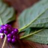 Bitki Yiyen Böceklerin Küresel Isınmadaki Payını Gösteren Bilimsel Çalışma