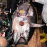 Bir Balık, Açık Artırmada 11 Milyon Liraya Satıldı
