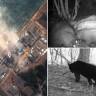 Japonya'nın Nükleer Faciadan Sonra Terk Edilen Bölgesi Fukuşima'yı 'Doğa' İşgal Etti