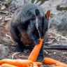 Avustralya Yangınının Bir Son Olmadığını Gösteren Umut Verici 10 Fotoğraf