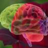 Araştırmacılar, Gül Kokusunun Öğrenme Gücünü Artırdığını Keşfetti