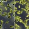 Dünyanın İlk Antimikrobiyal Telefon Camı