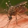 Çin, Dang Humması ile Mücadele Etmek İçin Sivrisinek Fabrikası Kurdu