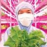 Ürün Yetiştirmede Teknolojik Tarım Dönemi